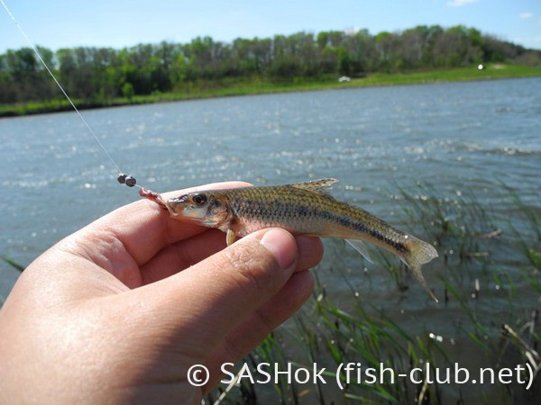 как правильно ловить рыбу фото