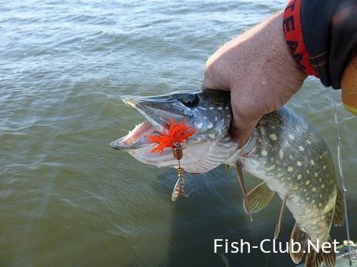 можно ли ловить рыбу с лодок весной