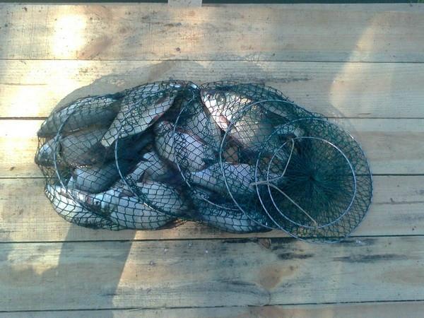 прикормка из комбикорма для рыбалки