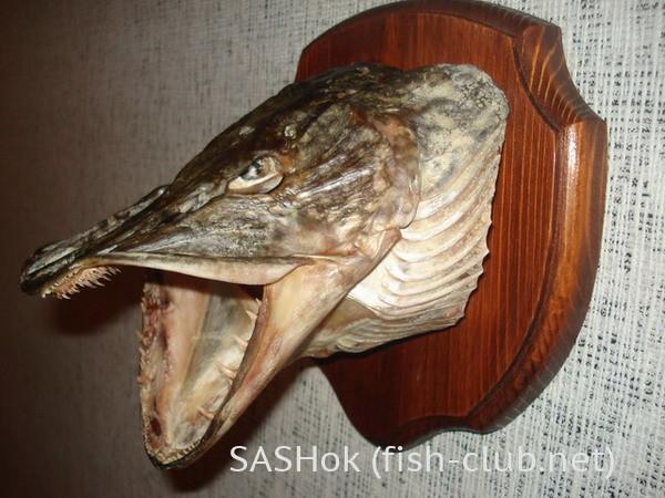 Как сделать из рыбы медальон