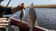 весенняя рыбалка на плотву на днепре