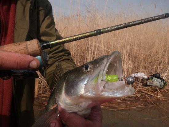 максимус спиннинги для рыбалки